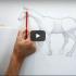 رسم حصان خطوة بخطوة
