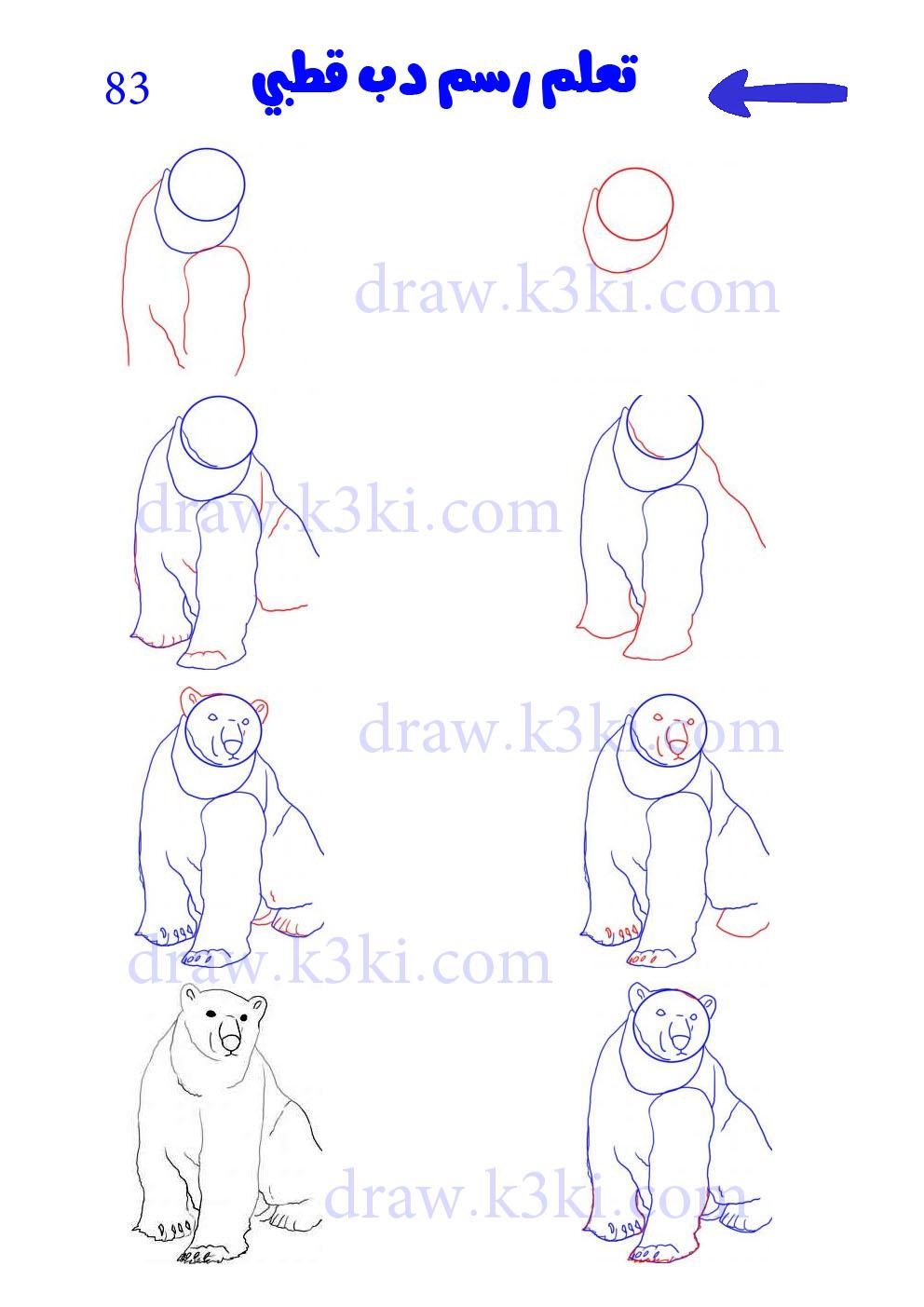 تعلم رسم دب قطبي تعلم الرسم