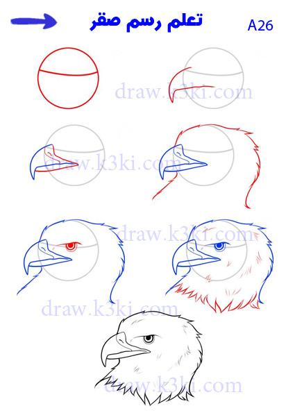 تعلم الرسم - تعلم رسم صقر