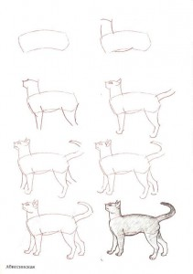 تعلم رسم قطة