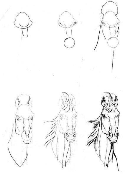 تعلم رسم حصان