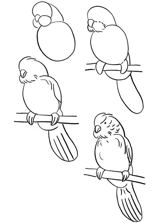 تعلم رسم ببغاء