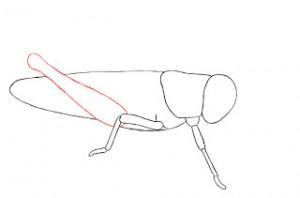 تعلم رسم جندب جرادة
