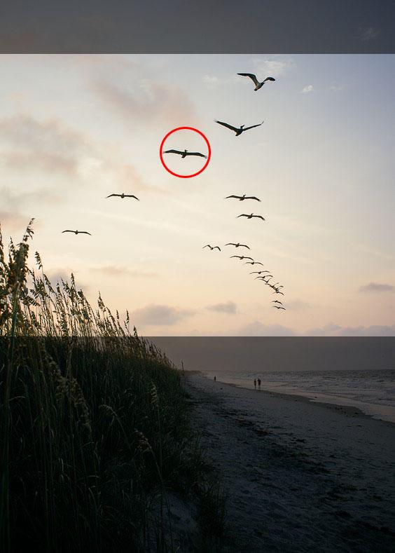 كيف ترسم الطيور المائية