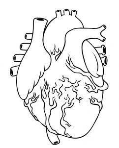 قلب حقيقي