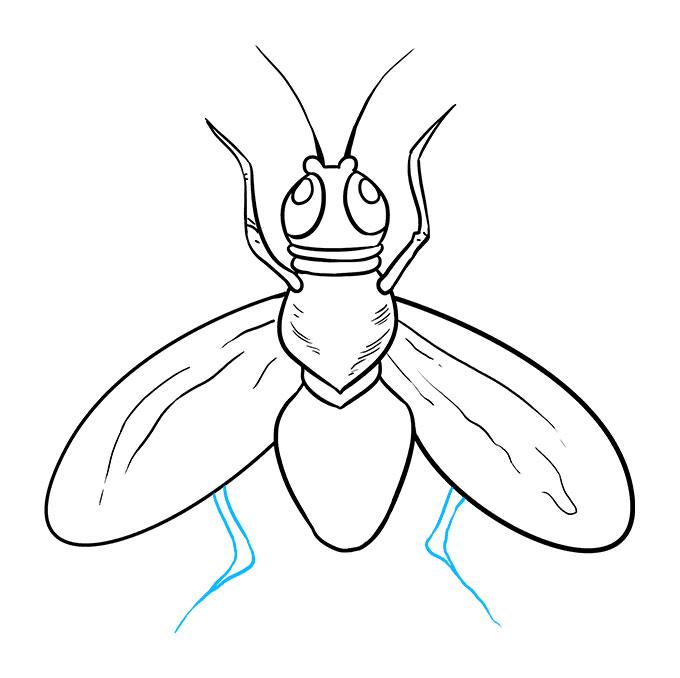 تعليم رسم ذبابة